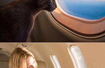viagem com animais