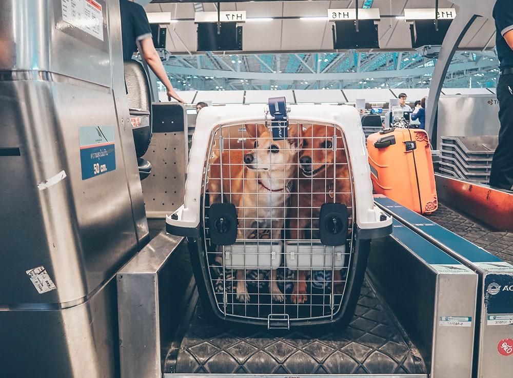 Como viajar para Portugal com cão e gato