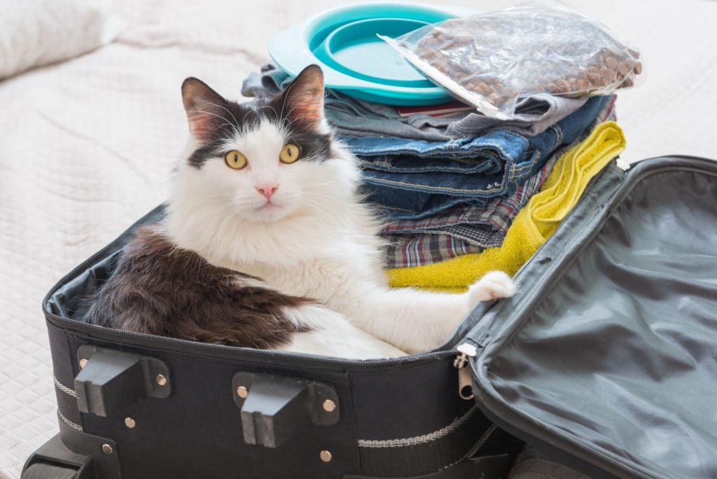 viagem-com-gato