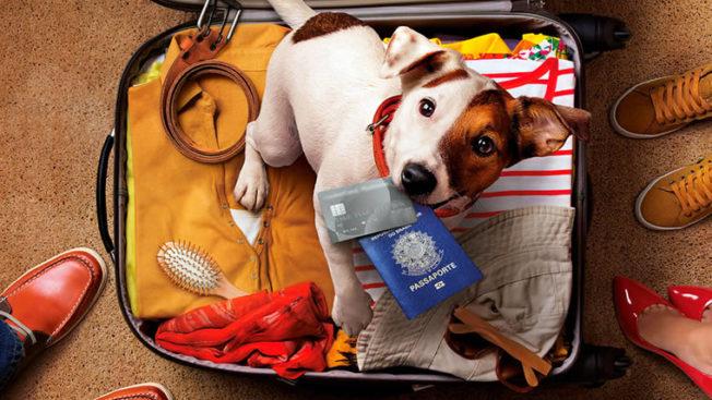 Viajar com cachorro para o México capa