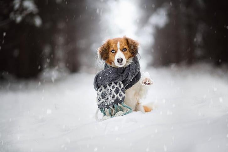 Viajar com o pet para a neve