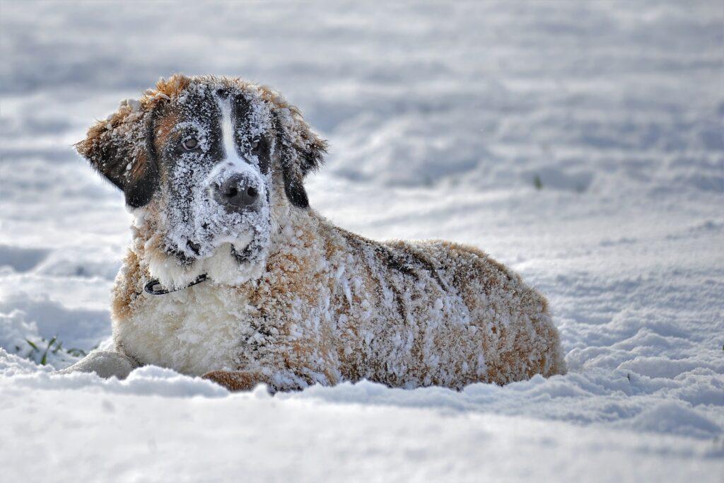 Viajar com o pet para a neve4
