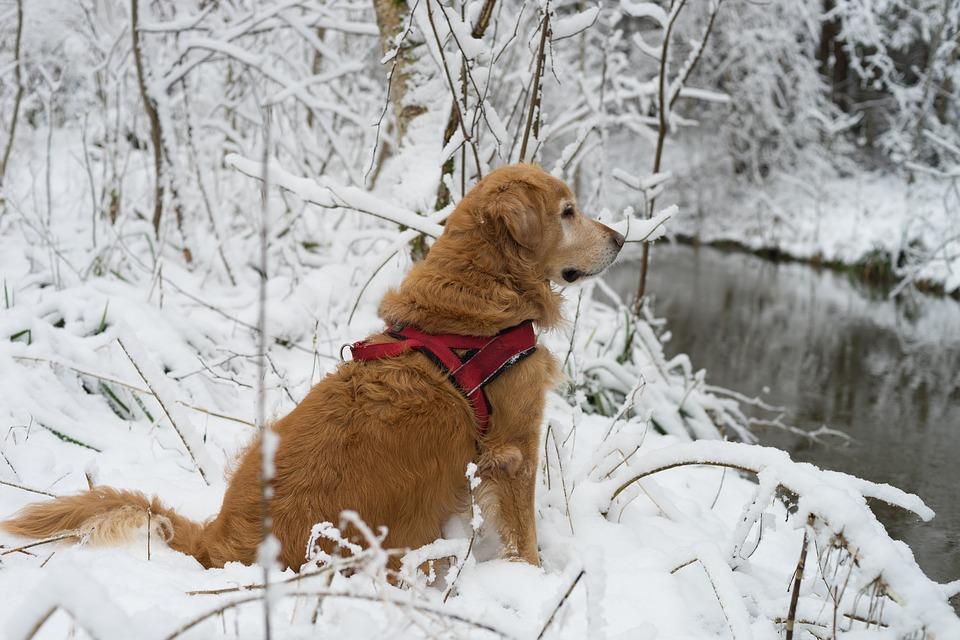 capa Viajar com o pet para a neve