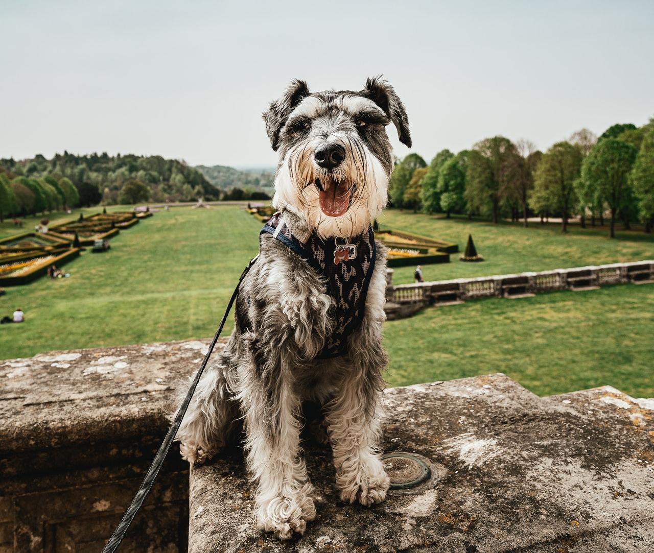 capa viajar com pets para o Reino Unido