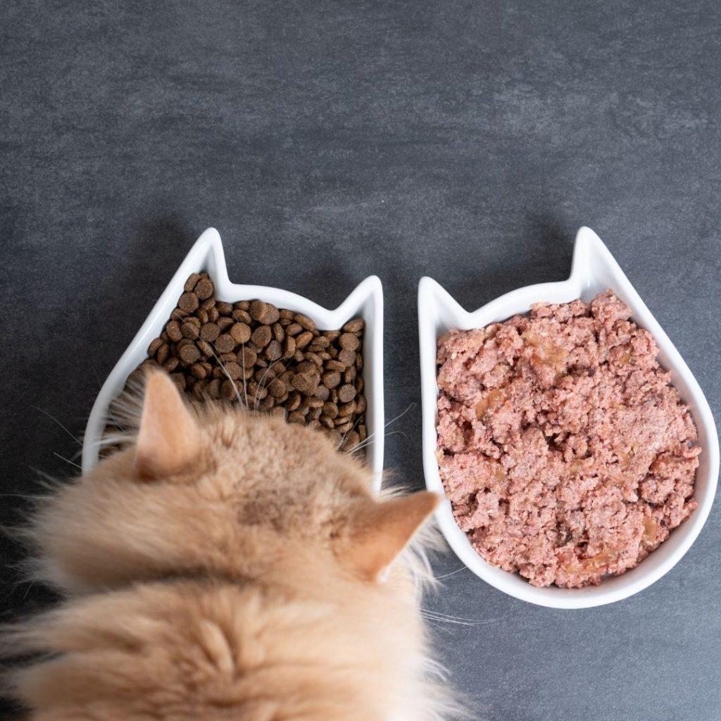 Exemplificar a diferença entra ração úmida e secar para gatos