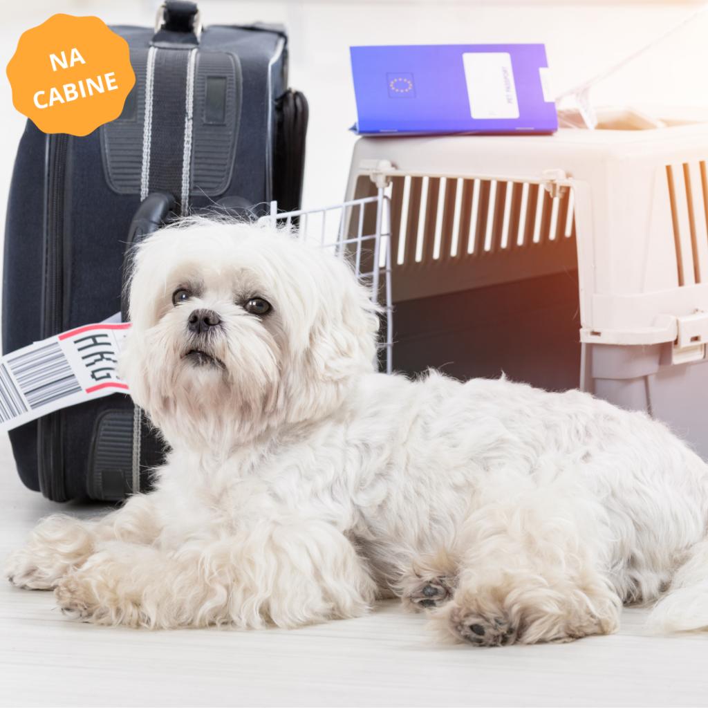 imagem para exemplo de transporte de animais na cabine do avião