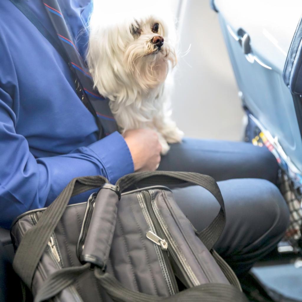 imagem para exemplo viagem com o pet de avião