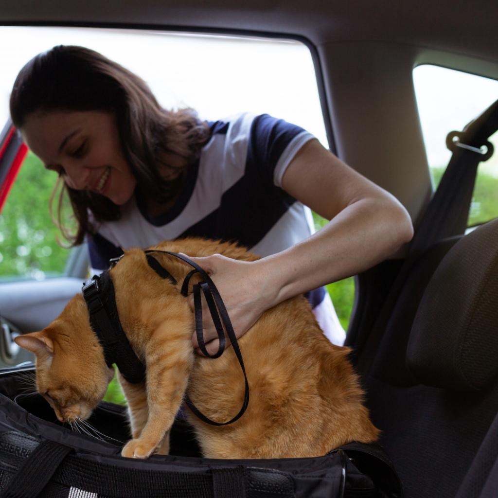 como viajar de carro com seu PET