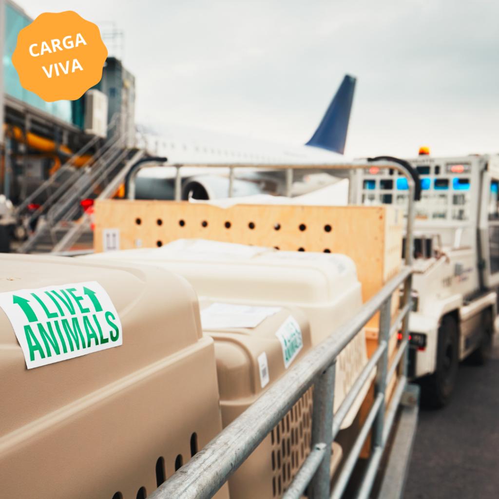 transporte de animais por carga viva