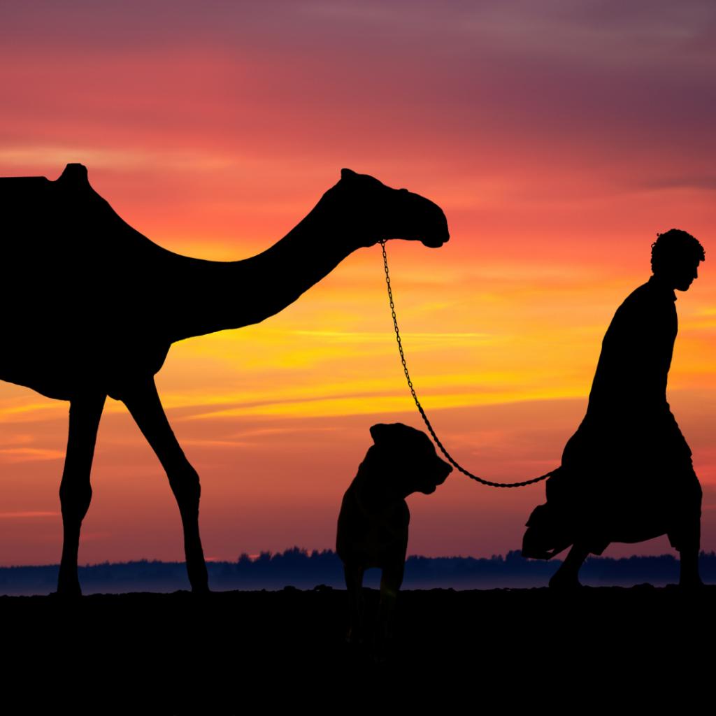 Viajar com animais para Arábia Saudita
