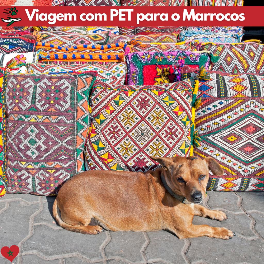 viajar com animais para o Marrocos