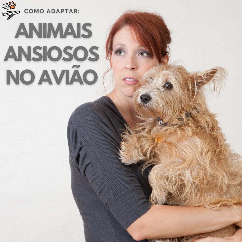 adaptar animais ansiosos em uma viagem internacional