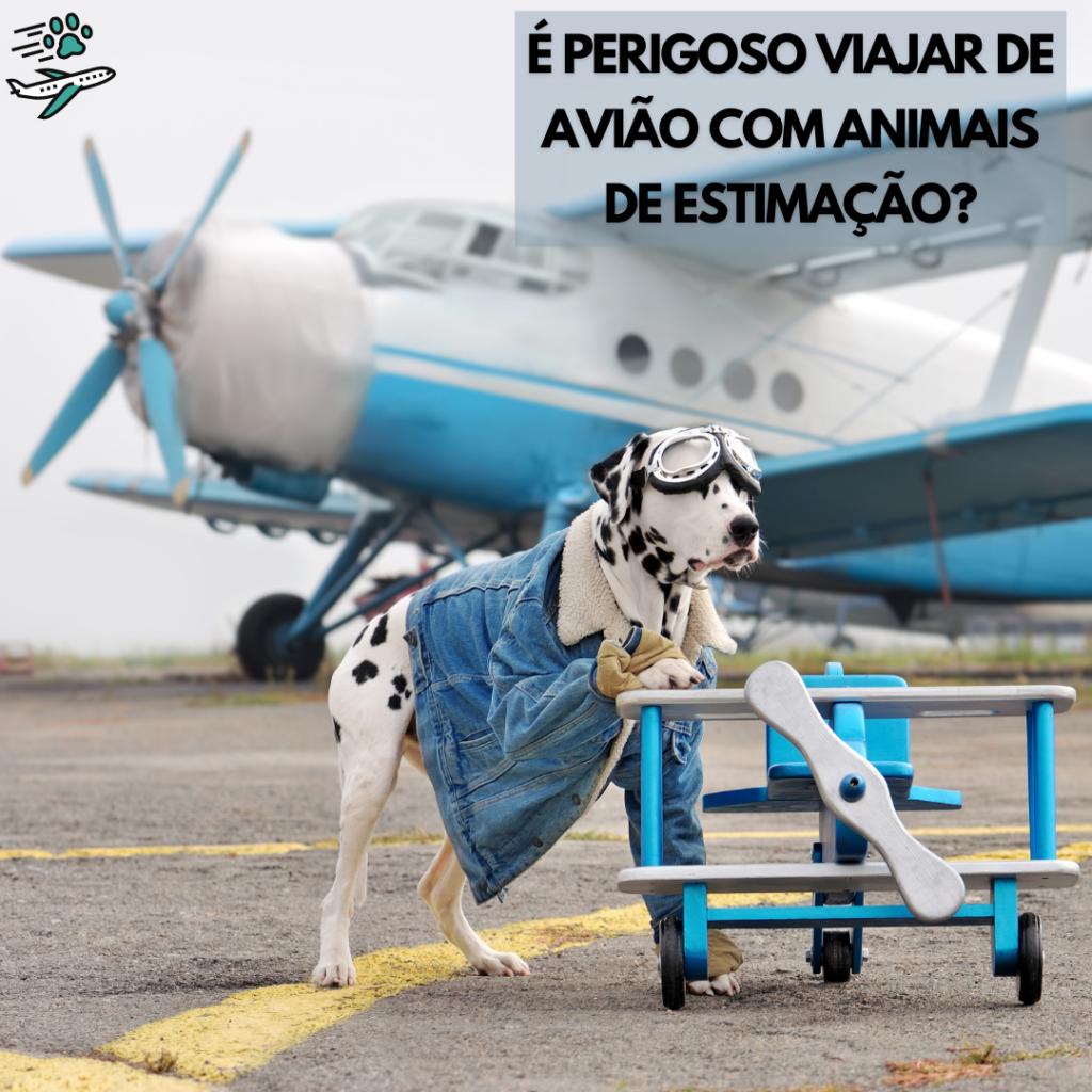 é perigoso viajar de avião com animais de estimação