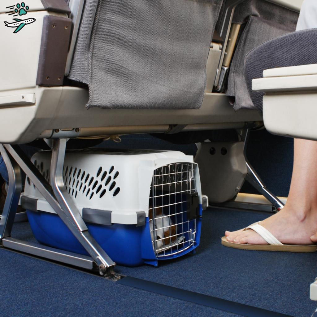Pet na cabine do avião