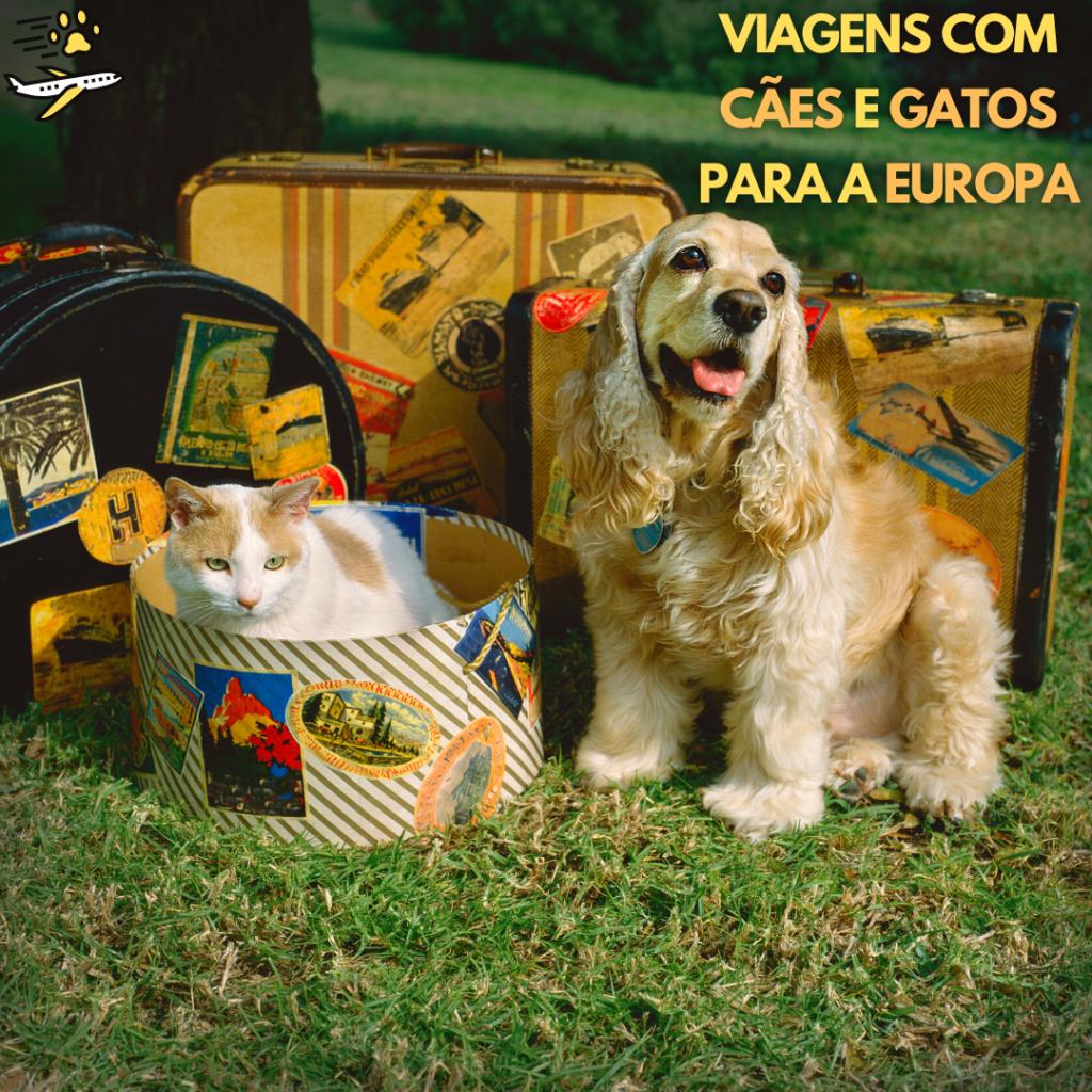 Como levar cachorro e gato para Europa