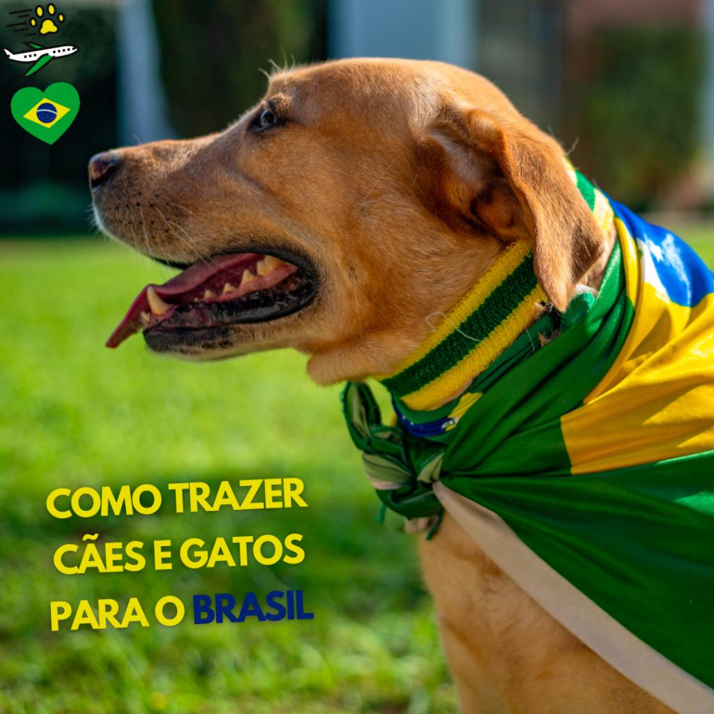 trazer cão e gato para o Brasil