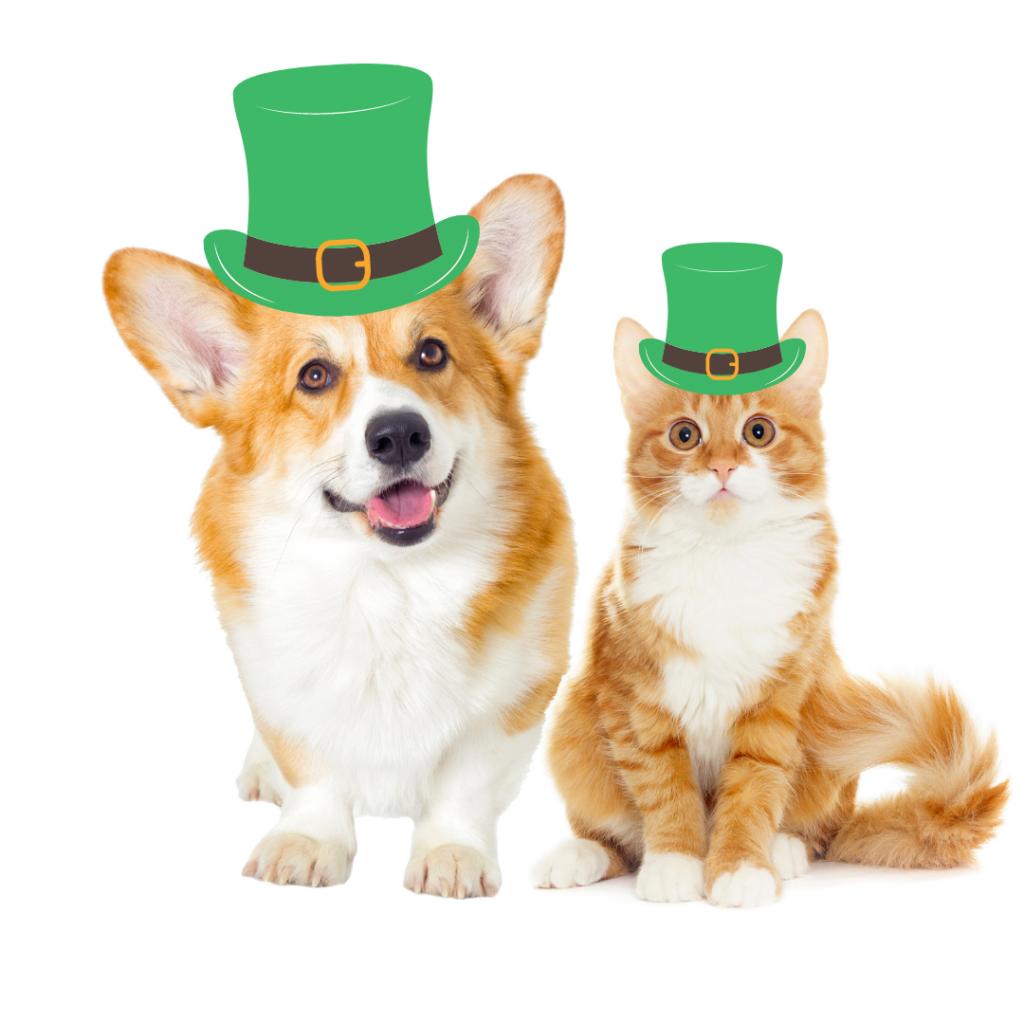 viajar com cachorro e gato para a Irlanda